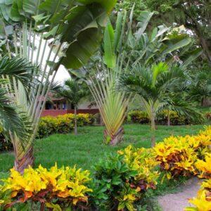 Tropical-foliage-at-ranch-RESIZED